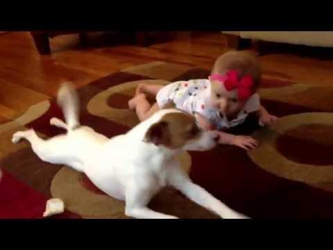 девочка собака приколы