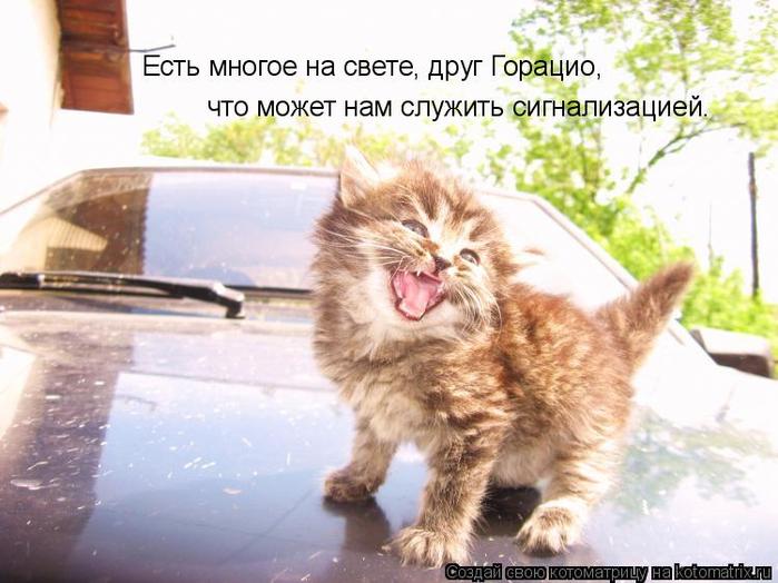 kotomatritsa__ (700x524, 345Kb)