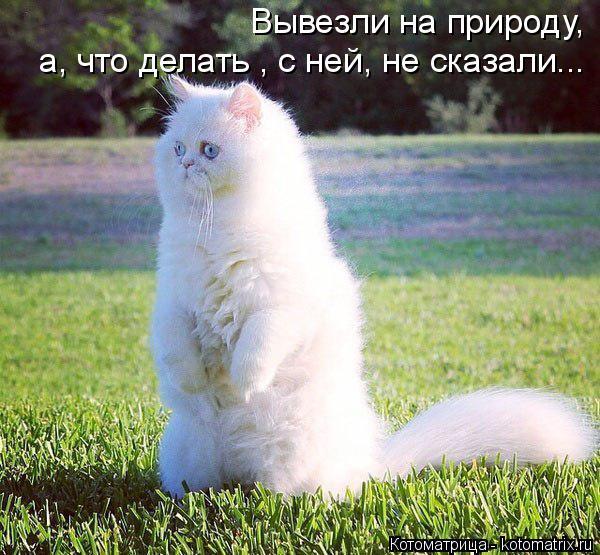 kotomatritsa_qC (600x555, 358Kb)