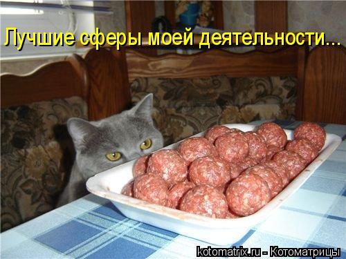 kotomatritsa_rK (500x375, 188Kb)
