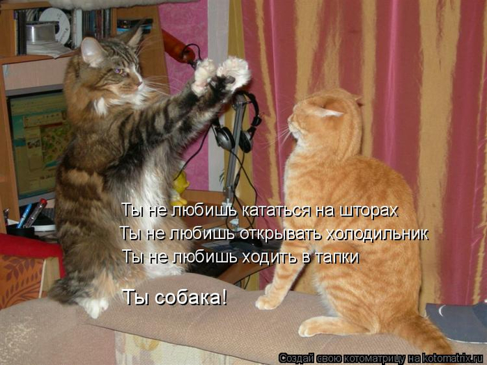 kotomatritsa_s- (700x524, 376Kb)