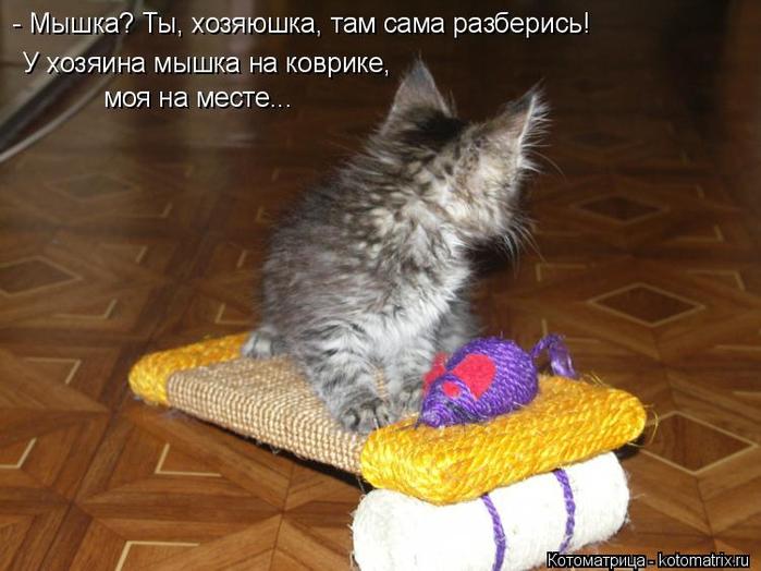 kotomatritsa_Xq (700x524, 326Kb)