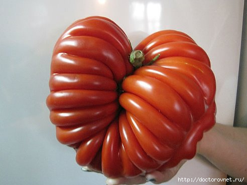 Помидоры. Польза томатов в лечебных целях