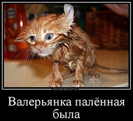 tmb_2609120947211951_thumb[16] (530x480, 60Kb)