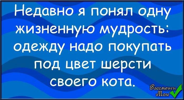3821971_kota_shers (698x381, 295Kb)