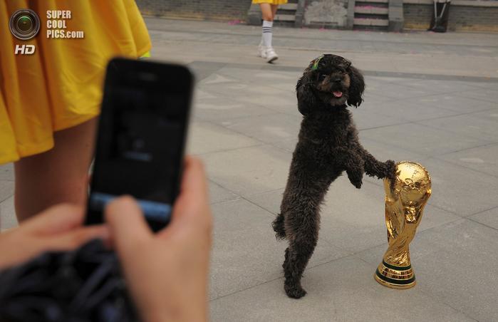 животные и футбол фото 1 (700x452, 300Kb)
