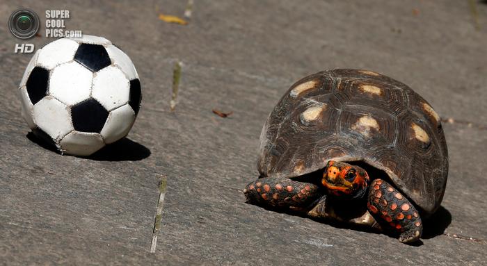 животные и футбол фото 3 (700x383, 327Kb)