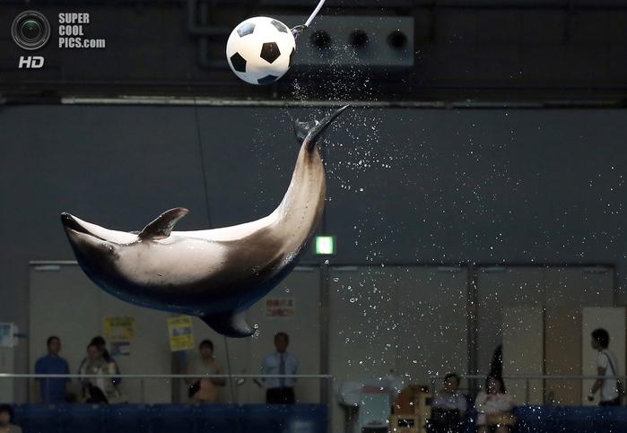животные и футбол фото 5 (700x483, 335Kb)