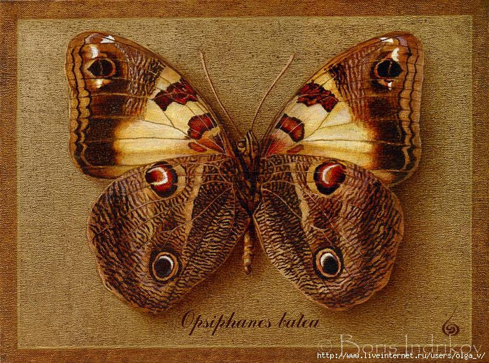 4964063_98062006_large_symbol_butterfly_9 (700x520, 369Kb)