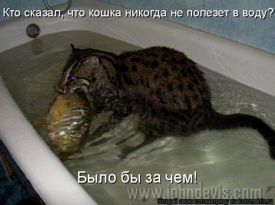 а ты случайно не рыбак