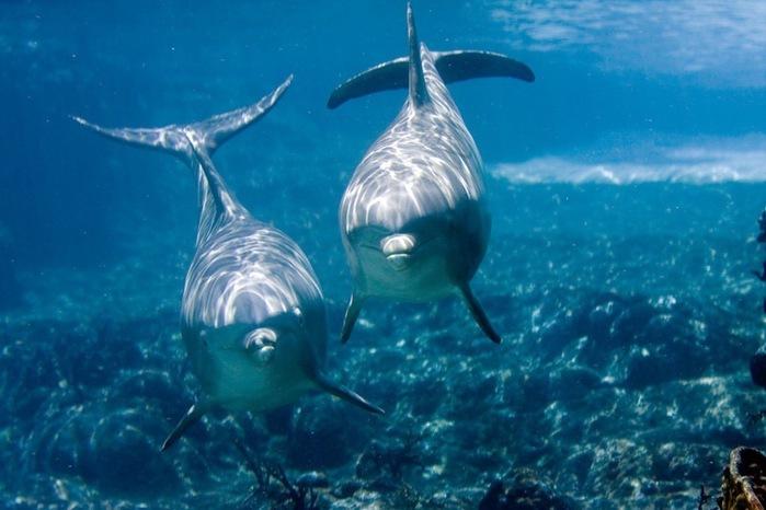 дельфины (700x466, 87Kb)