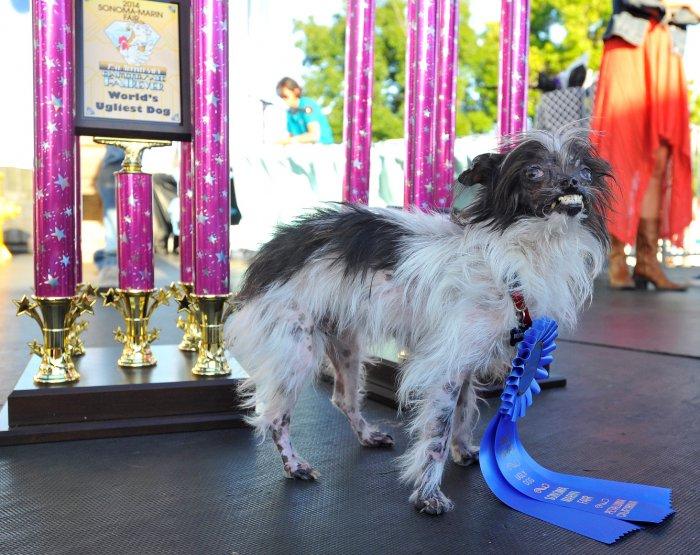 самая уродливая собака в мире 1 (700x555, 389Kb)
