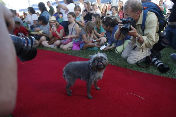 самая уродливая собака в мире 16 (700x466, 231Kb)