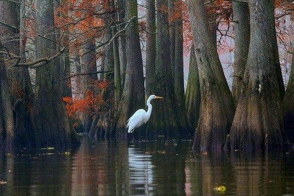 Lago-Caddo-foto-8 (604x402, 272Kb)