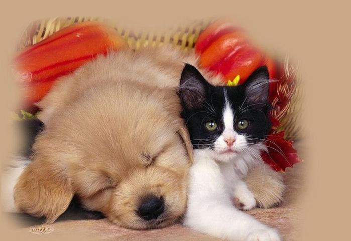 прикольные картинки котенок и щенок картинки хочу