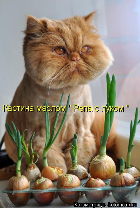 kotomatritsa_8N (449x669, 226Kb)