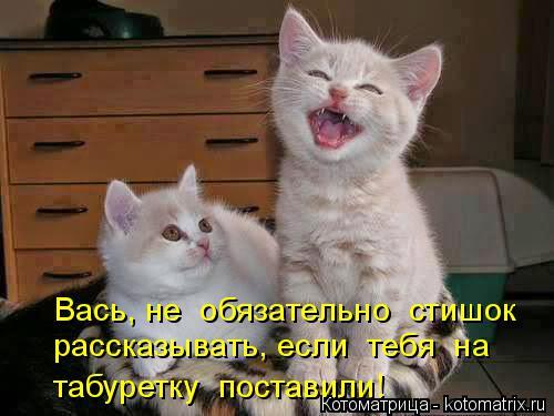 kotomatritsa_r5 (500x375, 153Kb)