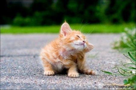 1298469774_kitty_01 (450x298, 77Kb)