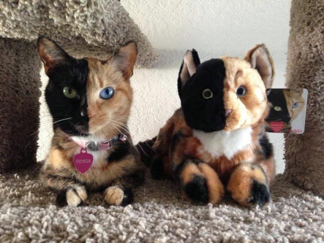 кошка венера фото 2 (650x487, 173Kb)