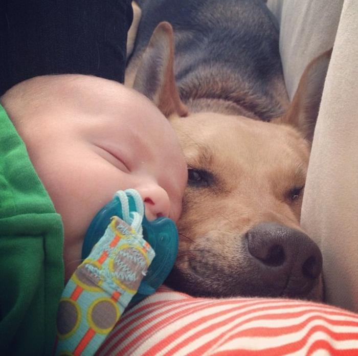 смешные фото детей и собак 4 (700x696, 395Kb)