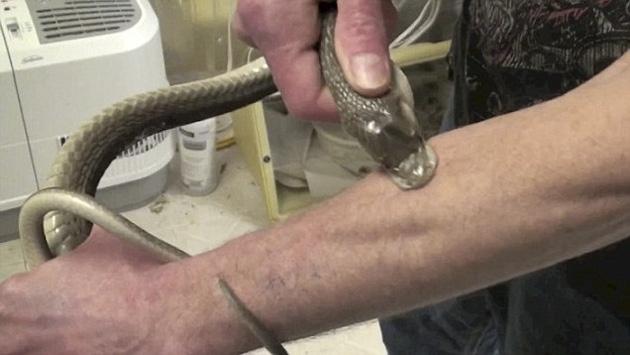 тим фрид со змеями фото 5 (630x355, 143Kb)