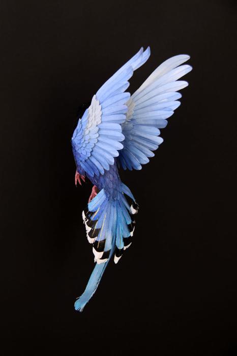 бумажные птицы Диана Белтран Херрера 11 (466x700, 148Kb)