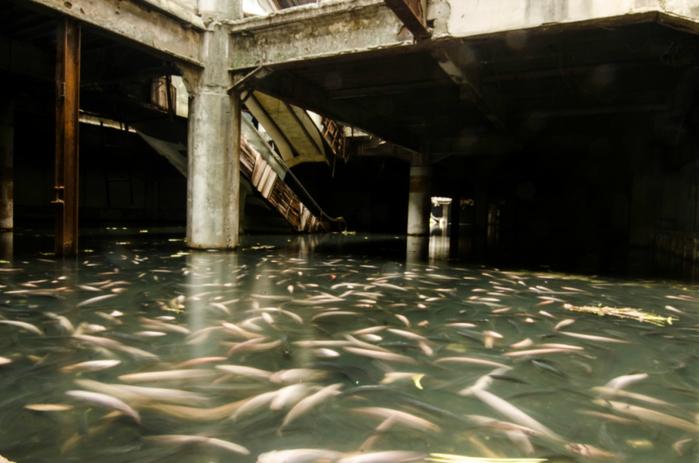 рыба фото 1 (700x463, 294Kb)