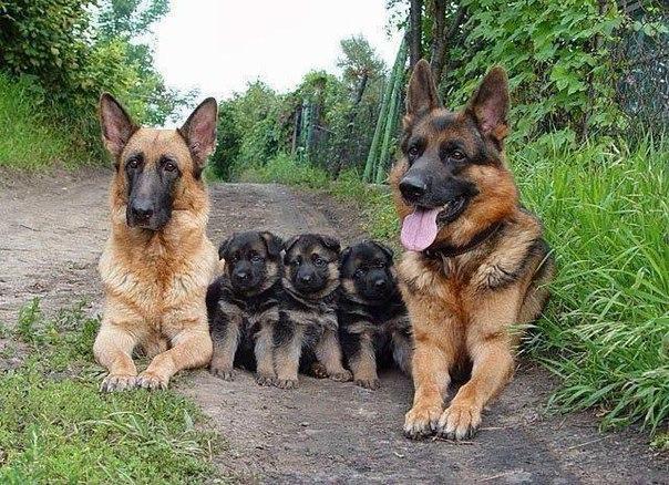 семья (604x438, 356Kb)