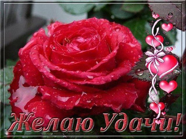 http://img1.liveinternet.ru/images/attach/c/11/114/616/114616153_UDACHI_OT_MENYA.jpg
