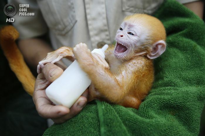 детеныши животных обезьяны фото 2 (700x466, 384Kb)