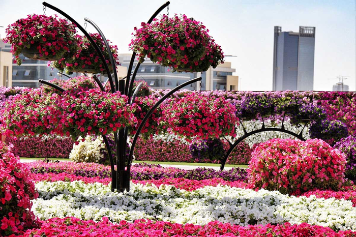 Dubai-Miracle-Garden-in-UAE (700x466, 520Kb)