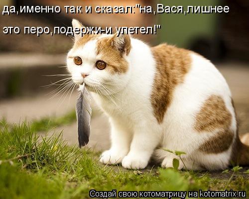 kotomatritsa_A (500x400, 192Kb)