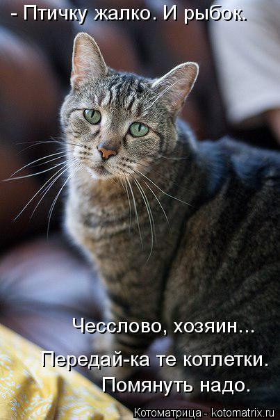 kotomatritsa_Eu (403x604, 210Kb)