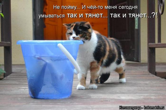 kotomatritsa_jN (700x465, 271Kb)