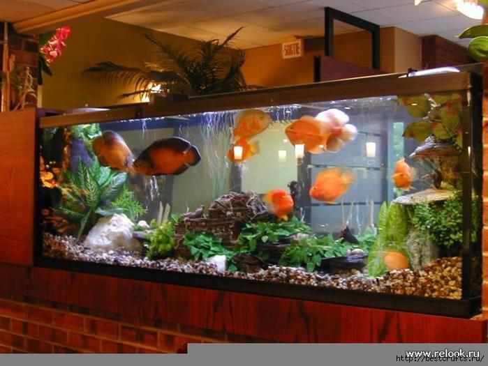 аквариум в интерьере (3) (700x525, 260Kb)
