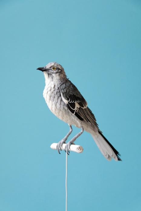 birds-5 (466x700, 145Kb)