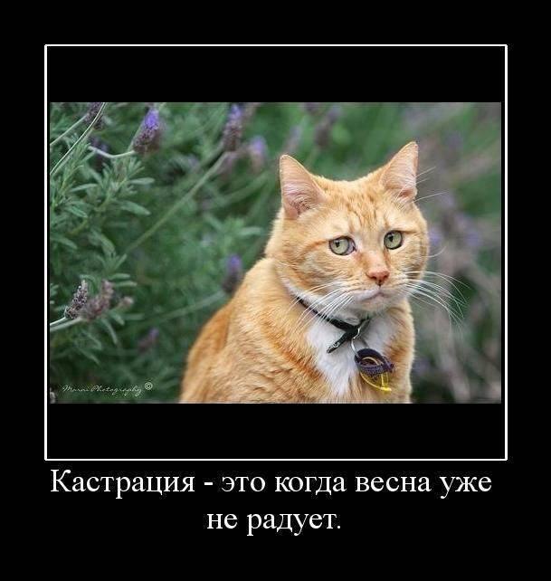 5680197_571Kastratsiya (609x642, 42Kb)