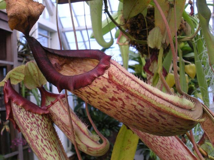 ботанический сад сан-франциско фото 10 (700x525, 445Kb)