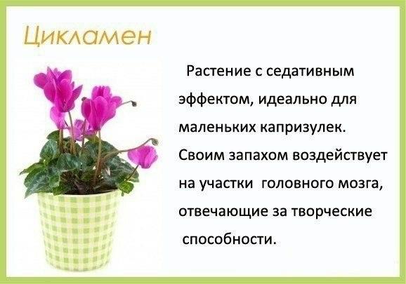 Цветы в детскую комнату и не только1 (578x405, 92Kb)