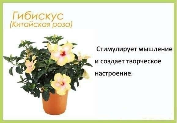 Цветы в детскую комнату и не только3 (579x404, 73Kb)