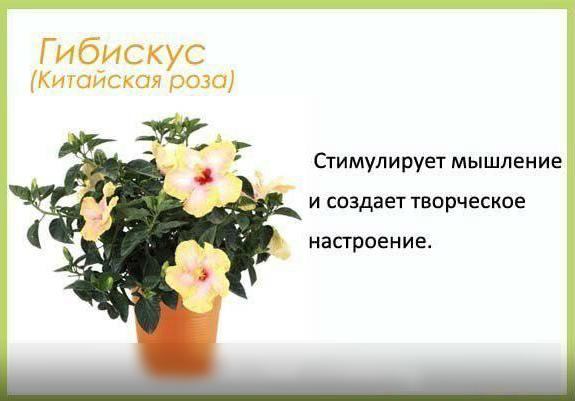 Цветы в детскую комнату и не только7 (575x401, 177Kb)
