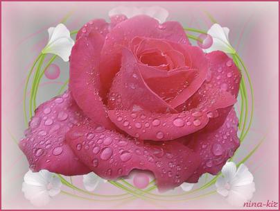 Роза (404x304, 195Kb)