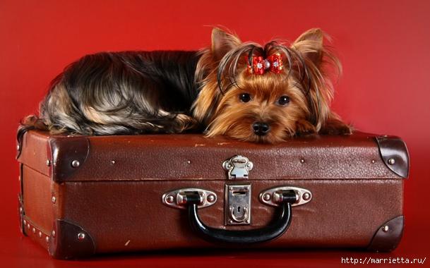 Аксессуары для собаки своими руками