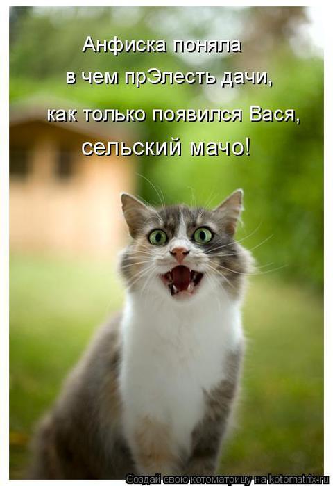 kotomatritsa_85 (480x700, 39Kb)