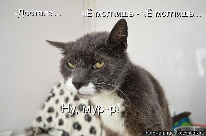 kotomatritsa_a8 (700x464, 35Kb)