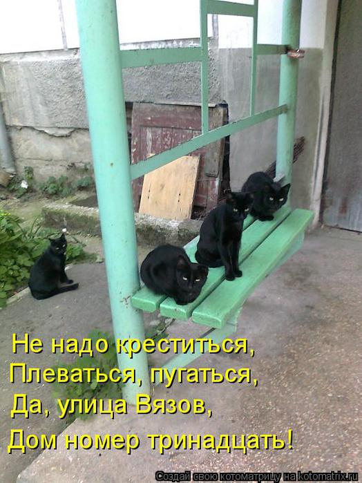 kotomatritsa_GG (524x700, 69Kb)