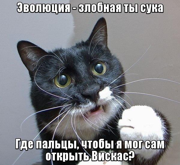 1405710562__BoSEvUFQ6g (600x548, 89Kb)