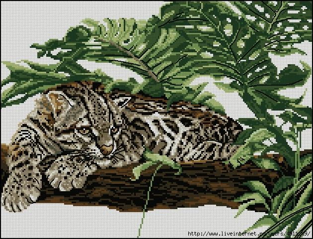 leopard-broderia (630x480