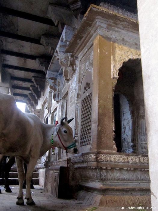 India Varanasi 2014 (21) (525x700, 299Kb)