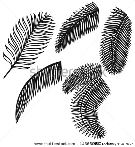stock-vector-set-of-palm-leaves-isolated-on-white-background-143650717 (433x470, 120Kb)